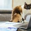 「在宅ワーク」「テレワーク」「リモートワーク」英語でよく使うのは、work-from-homeの画像