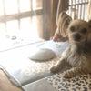 愛犬と一緒にポーセラーツ。の画像