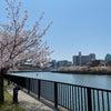 大川を散歩の画像