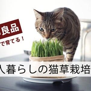 YouTube★無印さんの猫草栽培レポート&裏テクの画像