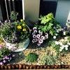 成長記録その1 門柱花壇の画像