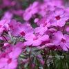 My Garden で感じる春の画像