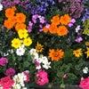 花まつり~みんな違ってみんな素晴らしい~の画像