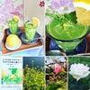 ♡免疫力アップ、腸活、美容と健康に緑のフレッシュスムージーの作り方動画をどうぞ&More!!♡の画像