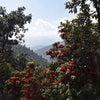 ネパール、外出禁止です。の画像