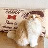 何でも遊び道具にするのが猫!の画像