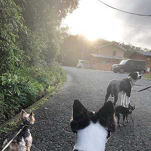 雨上がりの夕散歩の画像