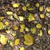 田原の屋久島コースで見られる樹木たち ② | 渥美半島☆自然感察ガイドの画像