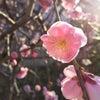 春をみつけて幸せ!の画像