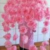 「デイサービスセンターもやいの家うのはな」に桜が咲きました!の画像