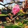 """♡~愛と微生物~「蘇生II」の映画感想&白鳥哲監督のリブログ→""""今、自分の生き方を問い直す時""""♡の画像"""