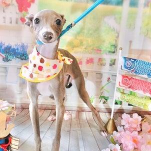 仔犬のルーチェの画像