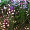 心にお花畑の画像