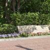 GWあまがさきお散歩(2) 上坂部西公園の画像