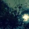 今月も繋がる新月~It'sOK◎女性のための禅タロットお茶会@ZOOM受付中の画像