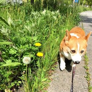 飼犬との蜜月期♡の画像