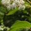 白い花いろいろ(自然編)の画像