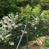 白い花いろいろ(園芸種)の画像