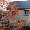 桜餅の香りの画像