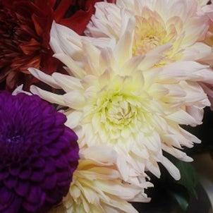 100本のお花に囲まれての画像