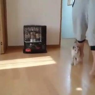 コトラのくっつき虫ぶりが可愛い動画!!の画像