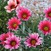 花の季節の画像