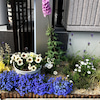 門柱花壇の整理の画像