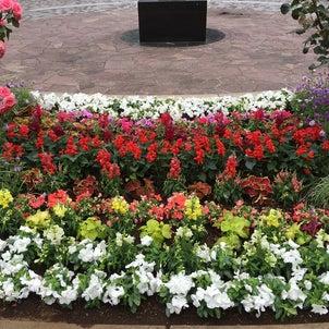 横浜 大通り公園の植栽とズーラシアの除草メンテナンスの画像
