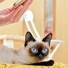 トイボブの猫ちゃんの画像