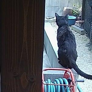 猫トイレ問題の解決の画像