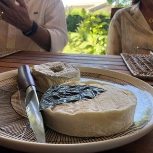 チーズの季節の画像