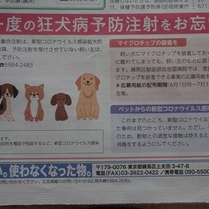 新型コロナ:ペットから人に感染した事例は無しの画像