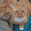 猫騒動、ちょっともう疲れたの画像