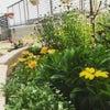6月の庭の画像
