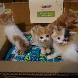 猫ボラも「新しいやり方」への画像