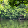 かる~く三宝寺池の画像