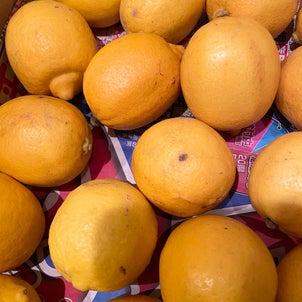 さわやかだな〜。レモンの画像