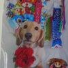 我が家の犬の画像
