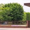 昭和記念公園 散策の画像