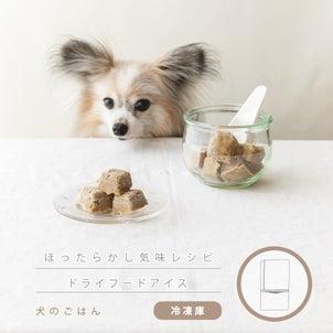 ドッグフードと水で作れる!とにかく簡単犬のアイスレシピの画像