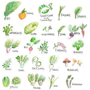 6月は新鮮フルーツと野菜の月の画像