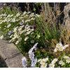 アパート花壇も夏仕様の画像