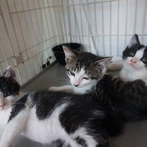 子猫2匹いっしょは大歓迎!の画像