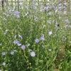 6/18のハーブの庭の画像