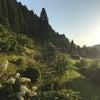日吉のとあるところの夕方の画像