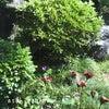 庭にかわいいお客様♪の画像
