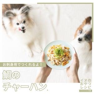 お刺身用の鯛でOK!犬用たいめし風チャーハンの作り方(手作り犬おやつレシピ)の画像