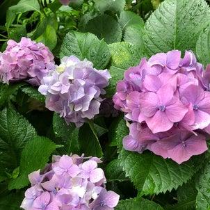 植物に癒されて 春日神社@三林町ほかの画像