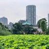 上野動物園が予約制で再開しましたよの画像