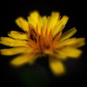道端に咲く花の画像